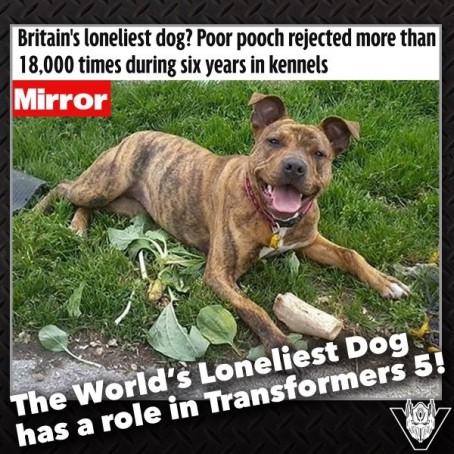 Freya, dubbed 'Britain's loneliest dog'