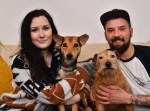 Machete attack dog rehomed thanks to journalist's appeal