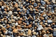 Pebbles were the first 'Joy of Sussex' to be featured