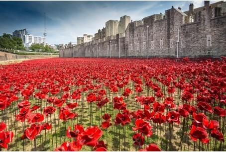 Stoke poppies 1