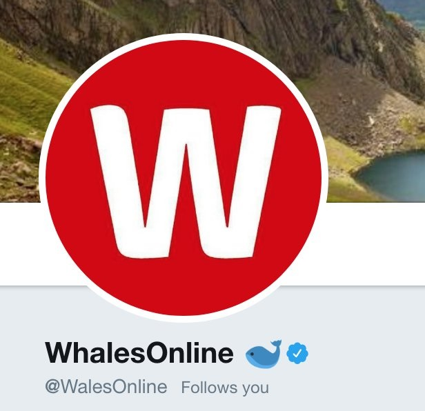 Whales Online
