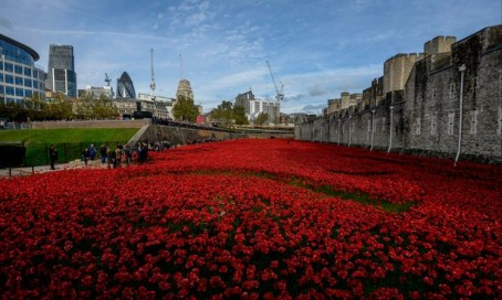Giant Poppy Display On Way To Stoke After Sentinel